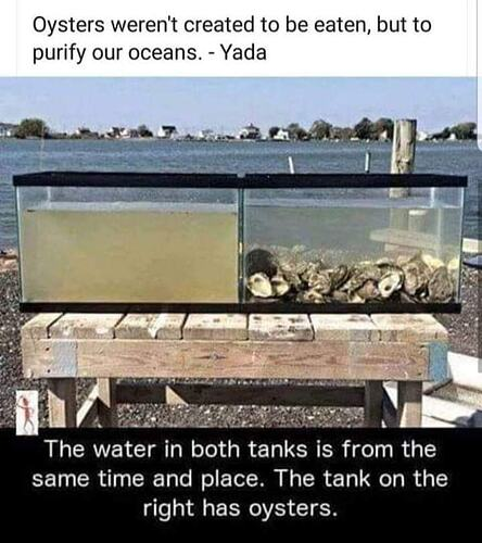 Oysters tanks