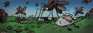 mosquitp