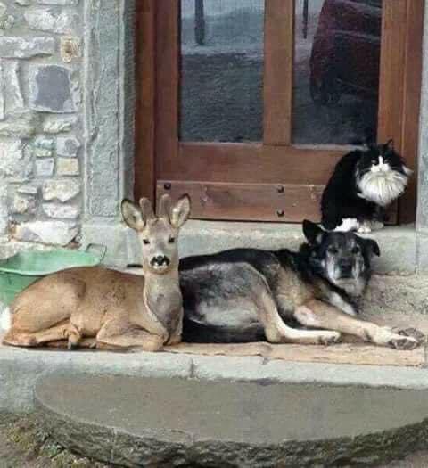 Dear dog and cat